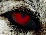 Wolfsterror