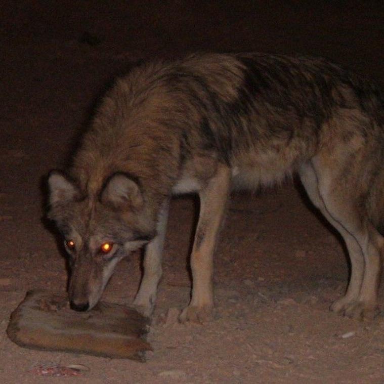 Cauê Ferreira De Andrade