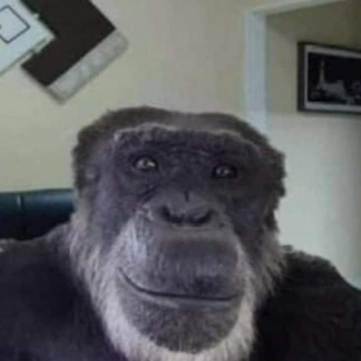 a monkey that watches films