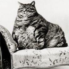 Blob Cat
