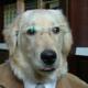 happydog006