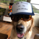 colelovesdog