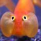 Fish_man_boy