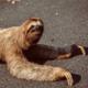 Slothlev
