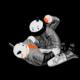 宇宙豬飛船射線