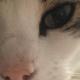 CatsDad21