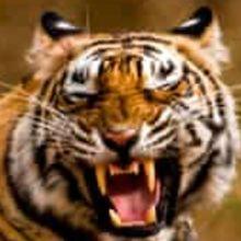 TigerAndMovieFan
