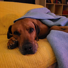 Doggy Dog