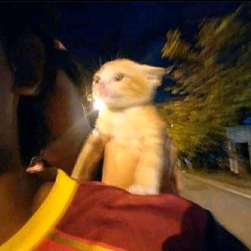Cinema Language
