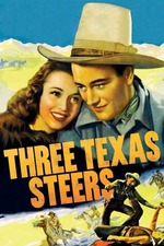 Three Texas Steers
