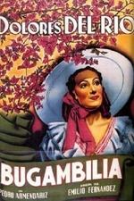 Bugambilia