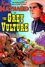 The Grey Vulture