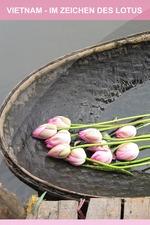 Le Lotus dans tous ses états