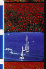 Poppies and Sailboats