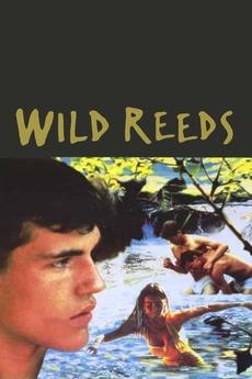 34925-wild-reeds-0-230-0-345-crop.jpg?k=
