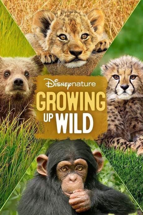 Watch Wild Things 1998 Online Full Movie Free HD