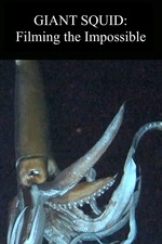 Legends of the Deep: The Giant Squid