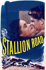 Stallion Road