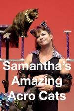 Samantha's Amazing Acro Cats