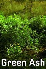 Green Ash