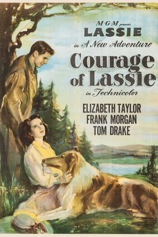 4883-courage-of-lassie-0-230-0-345-crop.