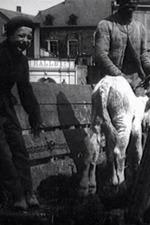 Leben und Treiben auf dem Viehmarkt
