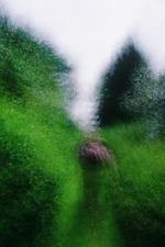 Brouillard #16