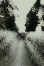 Brouillard #19