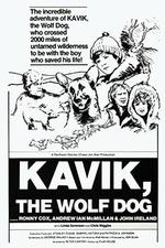 Kavik The Wolf Dog