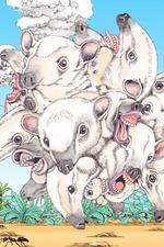 Animal World: Anteater