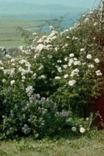 Glimpses from a Visit to Orkney in Summer 1995