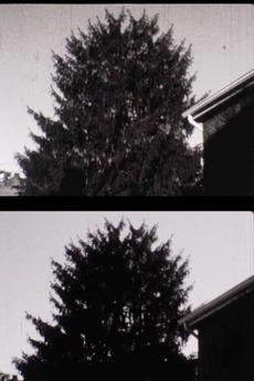 43 street Treelapse