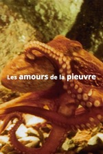 The Love Life of an Octopus