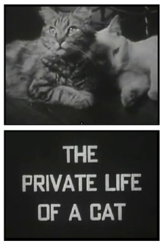 The Private Life of a Cat (1944)