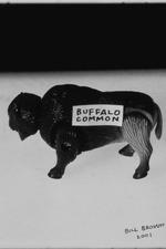 Buffalo Common
