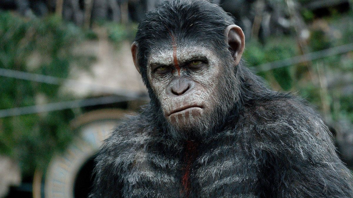 Dawn Of The Planet Of The Apes 2014 Directed By Matt Reeves Reviews Film Cast Letterboxd