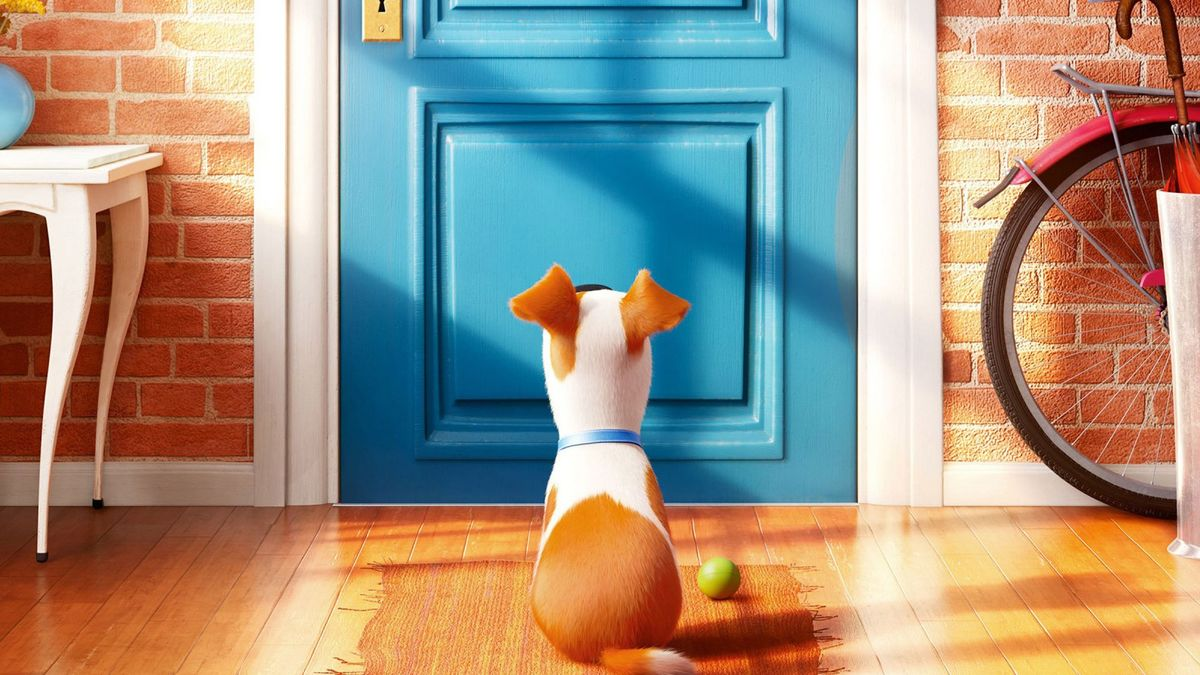 The Secret Life Of Pets 2016 Directed By Chris Renaud Reviews Film Cast Letterboxd